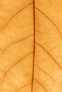 Macro of a dry leaf in the fall Royalty Free Stock Photo