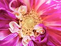 Macro of a Flower, Super fine details. Royalty Free Stock Photo
