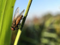 Macro, fly, insect, nature, green, extreem closeup, morning, Net Royalty Free Stock Photo
