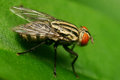 Macro fly portrait it is very beautiful Royalty Free Stock Images