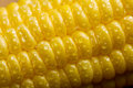 Macro of fresh maize corns Stock Photos