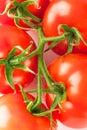Macro of fresh ripe tomatoes Royalty Free Stock Photos