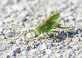 Macro of a grasshopper on the road Royalty Free Stock Images