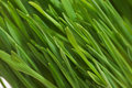 Macro green field Royalty Free Stock Photos