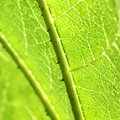 Macro of green leaf Stock Photos