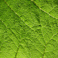 Macro of green leaf Stock Photo