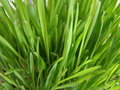 Macro herbe Photos stock