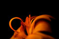 Macro Image Of Orange Calendul...