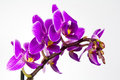 Macro image of orchid flower, captured with a small depth of field. Royalty Free Stock Photo