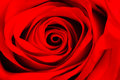 Macro Image Of A Red Rose