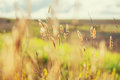 Macro image of wild grasses in a field Royalty Free Stock Photo