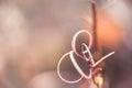 Macro image of wild grasses Royalty Free Stock Photo
