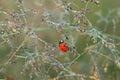 Macro the ladybug sits on a grass Royalty Free Stock Photo