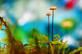 Macro Landscape Mushrooms