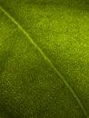 Macro Leaf Stock Photos