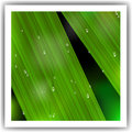 Macro Leaf with droplets Stock Images