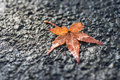 Macro of maple leaf fall on pavement. Royalty Free Stock Photo