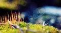 Macro moss beautifully blur green Stock Images