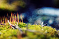 Macro moss beautifully blur other planet Royalty Free Stock Photos