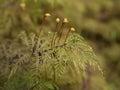 Macro Of Moss
