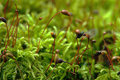 Macro of moss and fly Royalty Free Stock Images