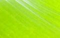 Macro Pattern Of Green Leaf