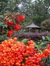 Macro photo with autumn background bright fruit bushes in a flower garden Royalty Free Stock Photo