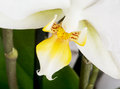 Macro photo of a beautiful orchid flower Royalty Free Stock Photos