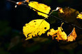 Macro photo of a fallen leaves in autumn forest Lizenzfreie Stockfotografie