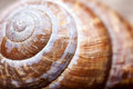 Macro photo. shape of natural spiral shell closeup Royalty Free Stock Photo