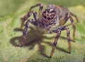 Macro photo spider looking lens camera Stock Photos