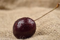 Macro photo of tree red cherries with water drops which are together on one green branch on jute background. Selective focus. Ligh Royalty Free Stock Photo