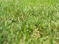 Macro photography of green grass Royalty Free Stock Image