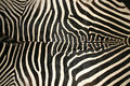 Macro picture of a zebra skin texture as a  background Royalty Free Stock Photo