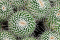 Macro of Pincushion Cactus Stock Photos