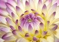 Macro pink flower Stock Photo