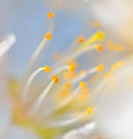 Macro pistil of flower yellow Stock Image