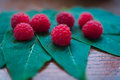 Macro raspberries on the leaf Royalty Free Stock Photo