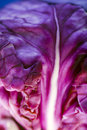 Macro of a red cabbage. Royalty Free Stock Photo