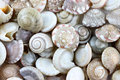 Macro of sea shells for background Royalty Free Stock Photo