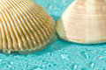 Macro seashells blue background water drops Stock Images