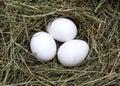 Macro Shot Of Eggs