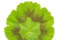 Macro shot of a green leaf texture