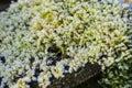 Macro shot of growing moss on a stump