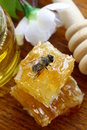 Macro shot of honey bee on a honeycomb Royalty Free Stock Photo