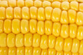 Macro shot of ripe corn Royalty Free Stock Photos