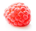 Macro shot of single tasty raspberry on white background Stock Photo