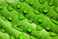 Macro shot of water drops on leaf Royalty Free Stock Photo