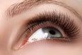 Macro shot of woman beautiful eye with extremely long eyelashes Royalty Free Stock Photo