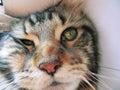 A macro shot cat`s face Royalty Free Stock Photo